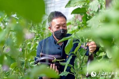 """呼和浩特:党员包户 菜农战""""疫""""不减收"""